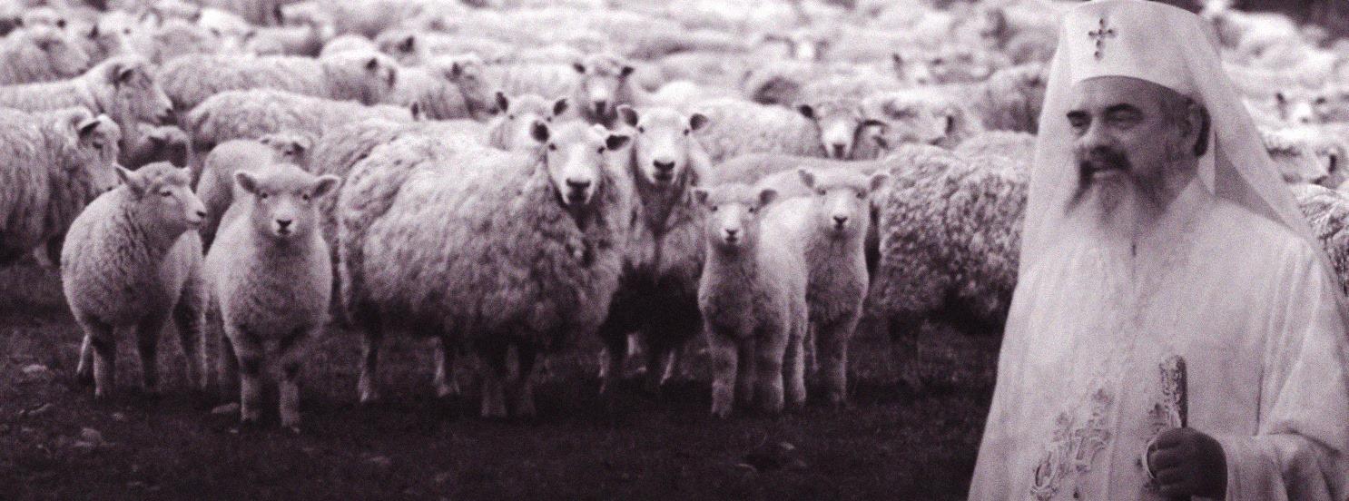 Daniel, păstorul unei turme de oi.