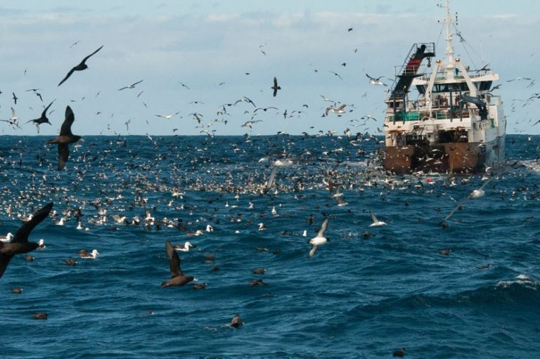 Unde este flota de pescuit oceanic a României?
