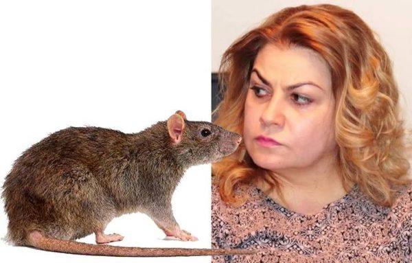 În Colegiul Național Pedagogic, șoarecii și șobolanii miaună!